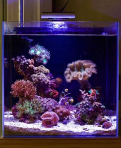 aquarium air laut nano tank
