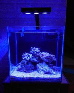 Proses Cycling Aquarium Laut